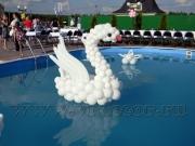 Swan_ balls